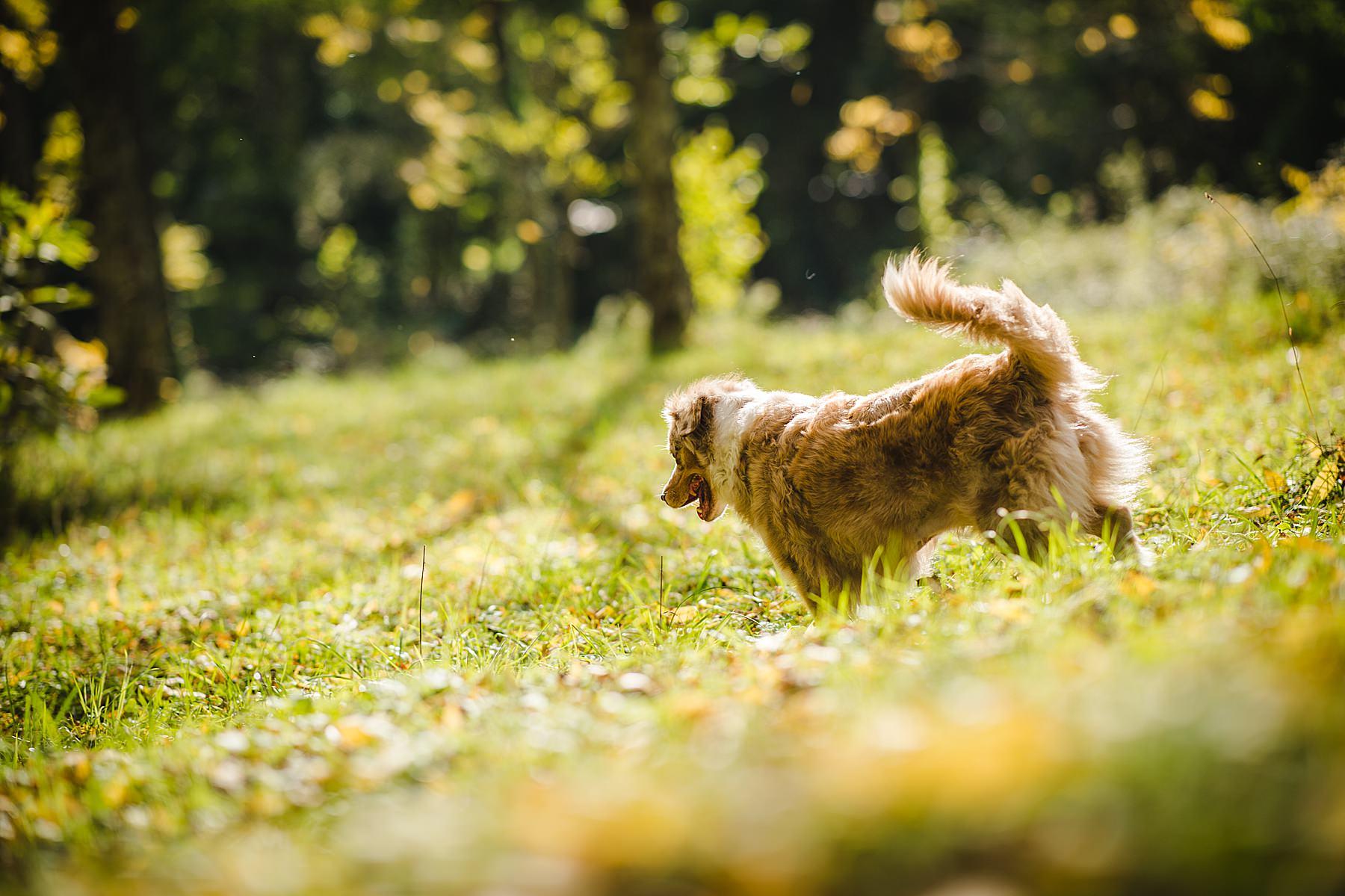 Servizio fotografico di coppia all'aperto con il cane